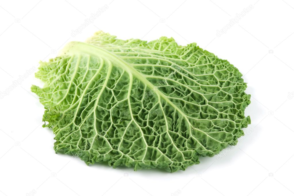 Leaf of Ripe Savoy Cabbage Isolated on White Background — Stock Photo #1629631