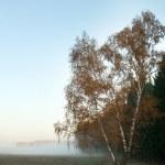Autumn foggy morning — Stock Photo
