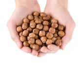 Human hands holding heap of hazelnut — Stock Photo