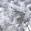 Fir tree branch covered with snow — Stock Photo #1705004