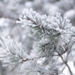 Fir tree branch covered with snow - Stock Photo