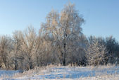 Frosty day in winter — Stock Photo