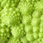Roman cabbage background — Stock Photo