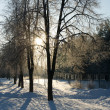 winter park in sneeuw — Stockfoto