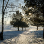 Frosty winter morning — Stock Photo