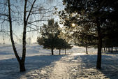 Frosty winter morning — Stock Photo