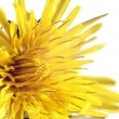 Blurry dandelions — Stock Photo
