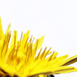图库照片: Blurry dandelions