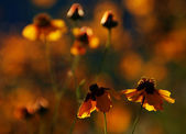 Flowerses — Stock Photo