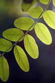 Foliage. — Stock Photo