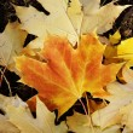 Autumn leaves — Stock Photo #1187829