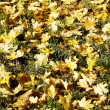 Autumn leaves — Stock Photo #1187909