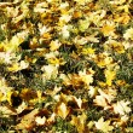 Autumn leaves — Stock Photo #1187909