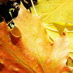 Autumn leaves — Stock Photo #1187934