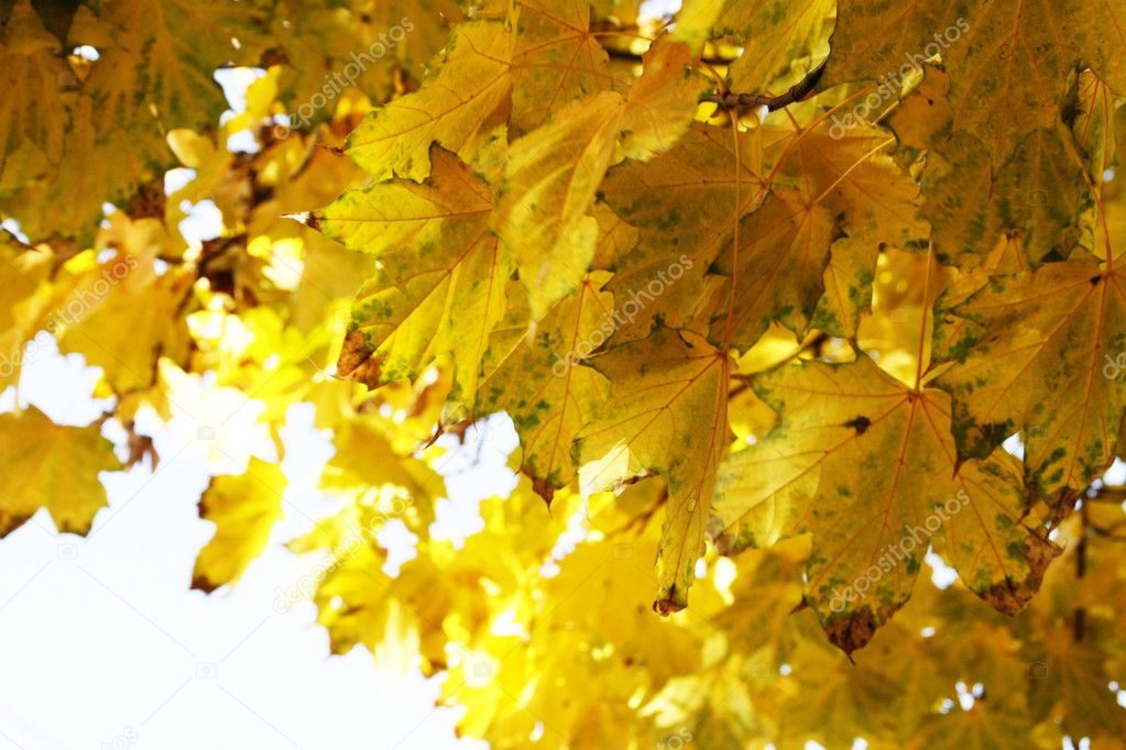 Autumn leaves as a background  — Stock Photo #1187961