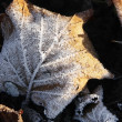 Frosty leaves — Stock Photo #2032774