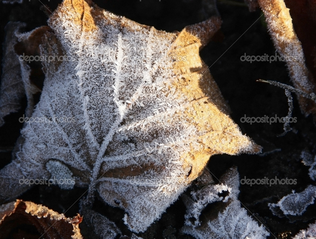 Frosty leaves lying on frozen grass on a cold fall morning — Stock Photo #2032774