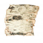 Bark Of The Birch — Stock Photo #1081751