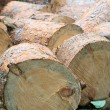 Log Pile — Stock Photo #1085785