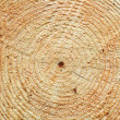 Tree Rings — Stock Photo #1086116