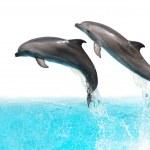 hoppande delfiner — ストック写真