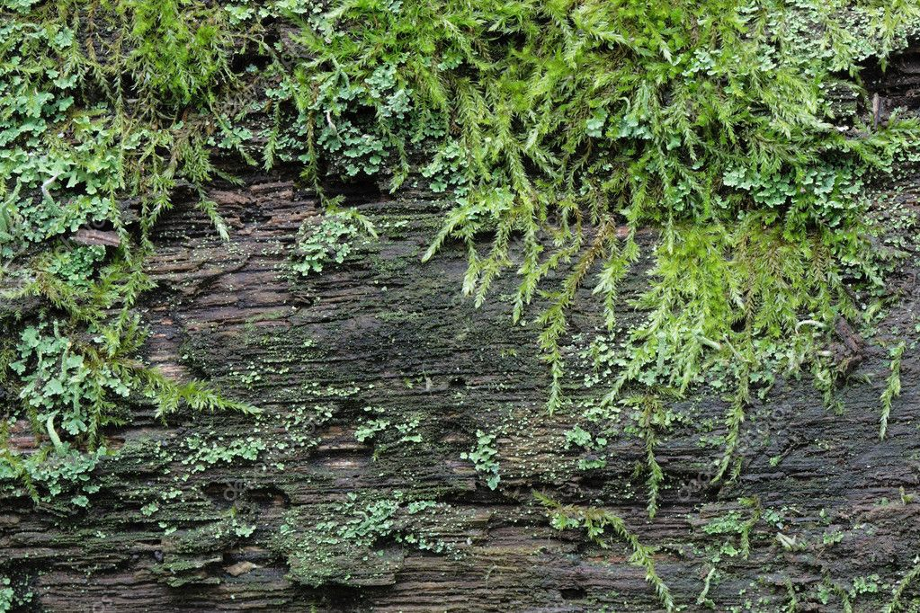 Background with nice green moss on old tree log — Stock Photo #1088302