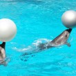 Dolphins With Balls — Stock Photo #1090915