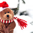 Christmas Teddy Bear — Stockfoto
