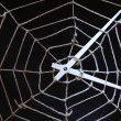 Web For Time — Stock Photo #2524432