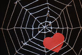 Love Web — Stock Photo