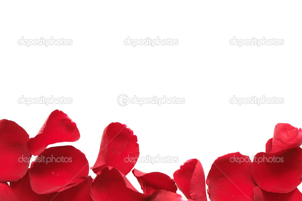 Border made from red rose petals isolated on white background with clipping path  Stock Photo #2557132