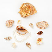 Shells and pearl — Stock Photo