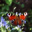 Butterfly — Stock Photo #2244700
