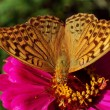 Butterfly — Stock Photo #2244717