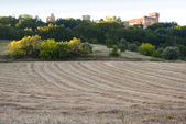 A field in Italy — Stock Photo