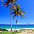 Pair palms on beautiful beach — Stock Photo #1038965