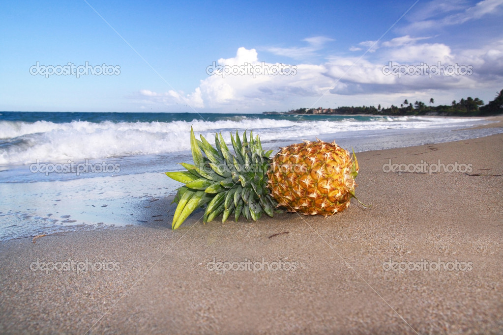 Lying pineapple on coastline  Foto Stock #1040207