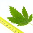 Marihuana in centimeters - Stockfoto