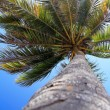 Stock Photo: Palm on beach
