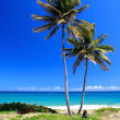 Stock Photo: Pair of palms on beautiful beach