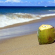 Coconut on sand of Atlantic ocean — Stock Photo
