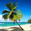 Palm on beautiful beach - Stock Photo