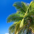 Palm on blue sky - Stock Photo