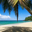 Caribbean beach with palm - Stock Photo