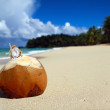 Coconut cocktelle — Stock Photo #1614804