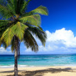 Foto Stock: Palm on wild beach