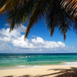 Stockfoto: Wild beach with leaf of palm