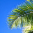 Stock Photo: Palm leaf on blue sky