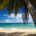 Wild beach with leaf of palm — Stock Photo #1618072