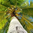 Stock Photo: Green palm